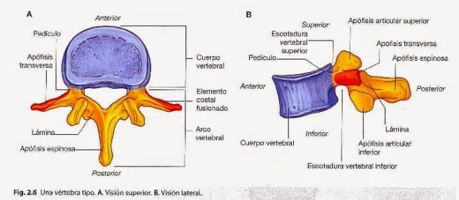 Recomendación postural para mejorar tu columna lumbar   UCEi ...