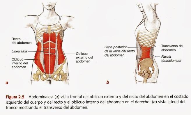 Recomendación postural para mejorar tu columna lumbar | UCEi ...
